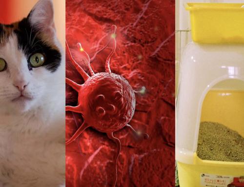 ¿La caca de gato puede curar el cáncer?