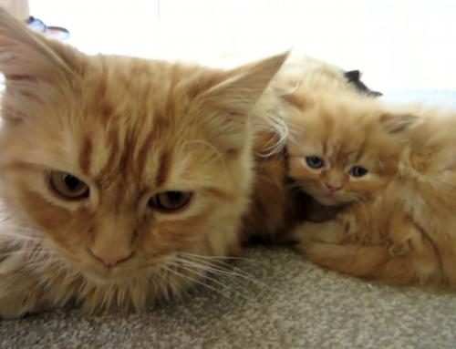 Gatito se acurruca con su madre buscando consuelo, pero entonces la cámara se aleja y… ¡DEMASIADO tierno!