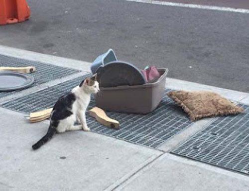 Abandonan un gato con todas sus pertenencias en una esquina de Nueva York