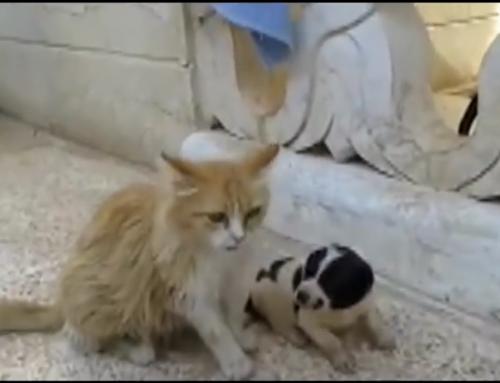 Un cachorro estaba llorando para que alguien lo salvara, y esta gata tuvo una reacción muy emotiva al verlo tirado en el suelo.
